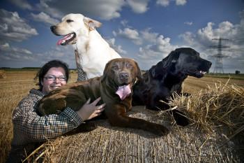 labradors in drie kleuren van fokker Naomie Wijsbeek
